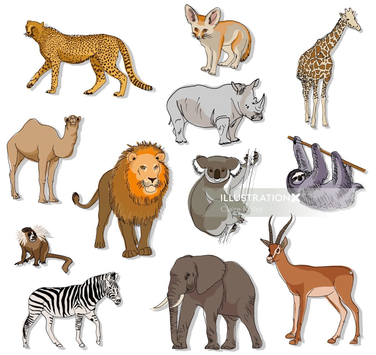 Set of animals illustration