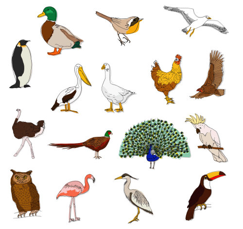Collection of birds illustration