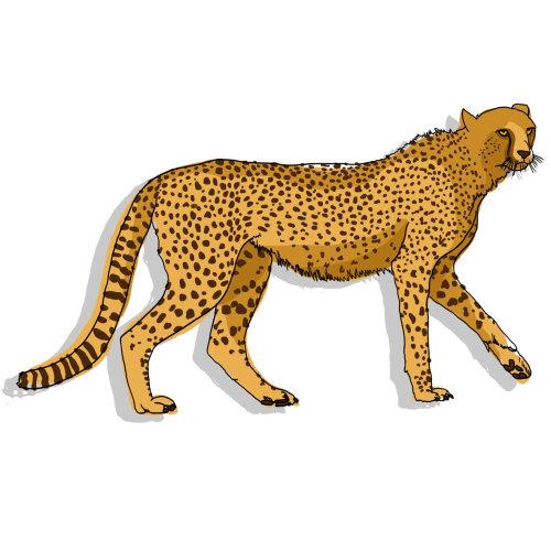 Animal Cheetah painting