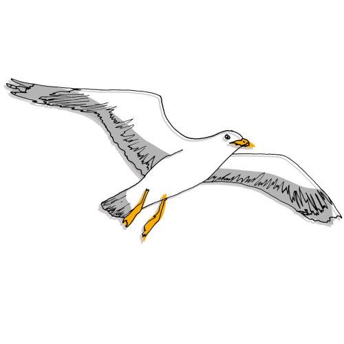 Pencil made art of Albatross Bird