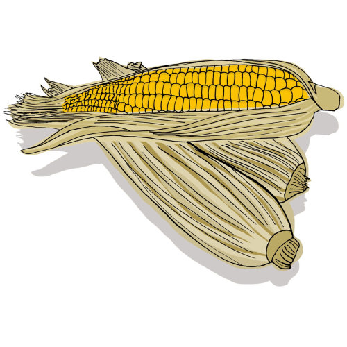 Sweet Corn food illustration