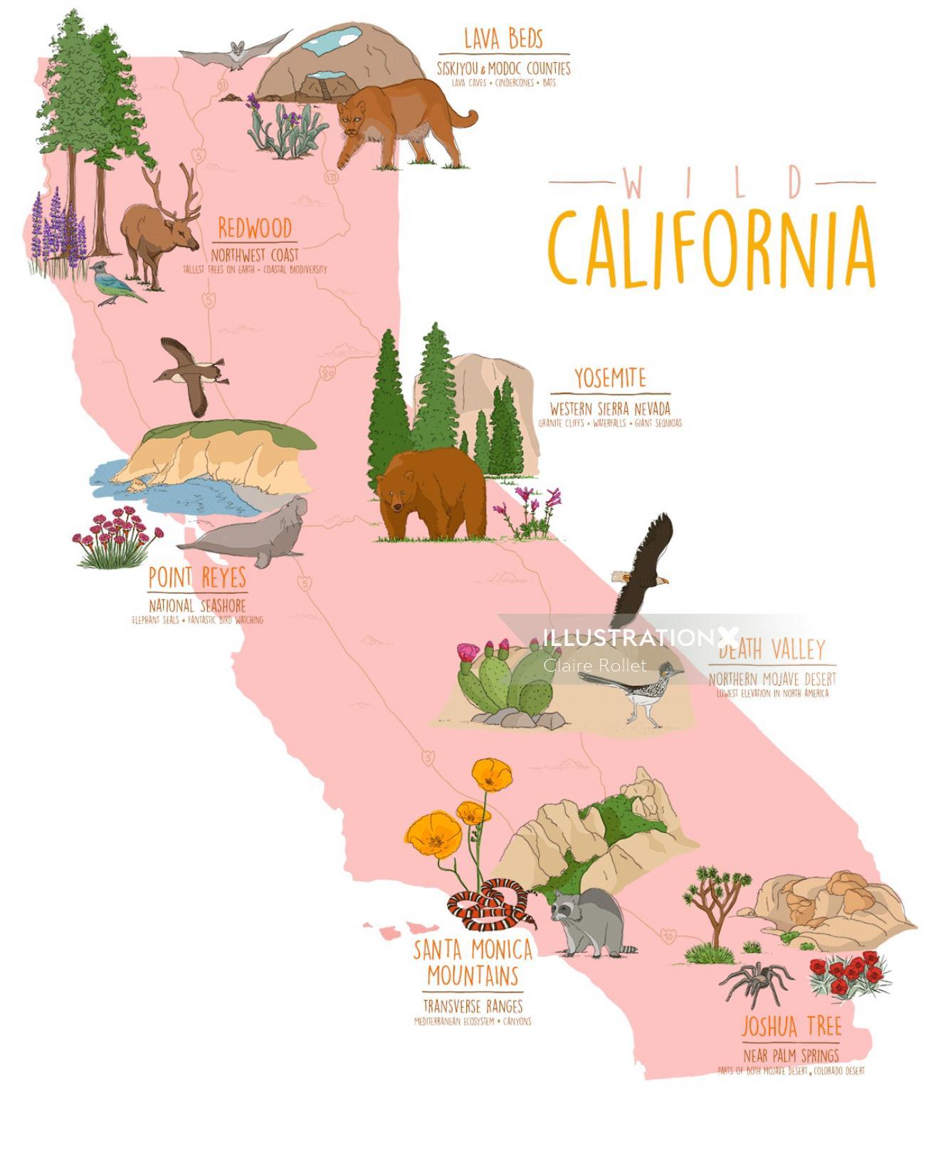 Map illustration of US National Parks