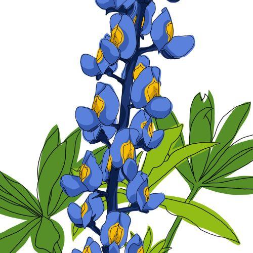 Flower Bluebonnet watercolor painting