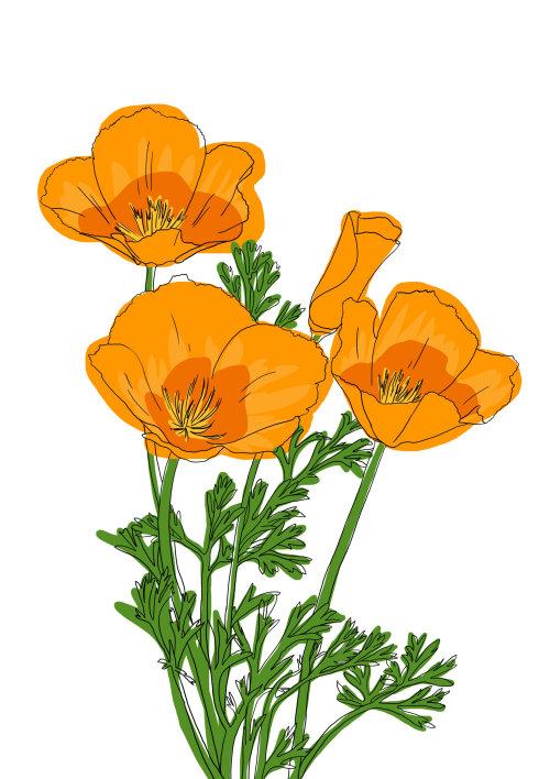 Painting of flower Poppy Bright Orange