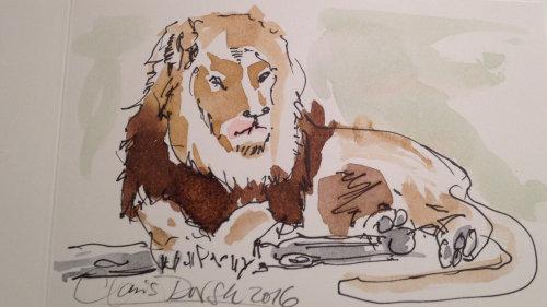 Ilustração Solta de Leão