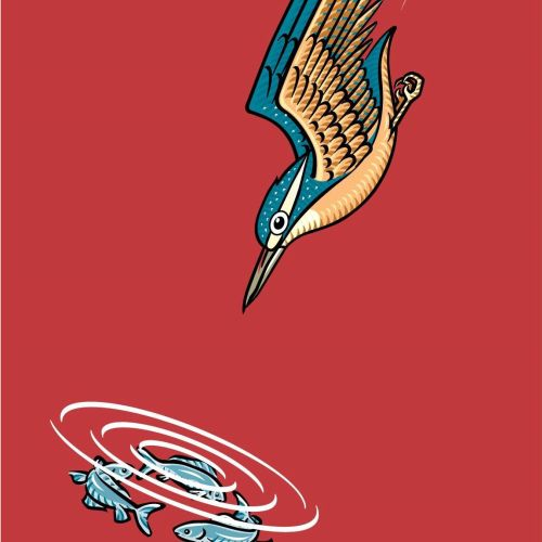 An illustration of cove a kingfisher diving down