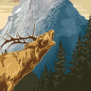 Moose illustration | Animal style gallery