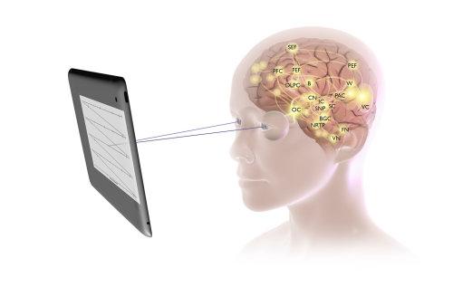 Illustration médicale du cerveau humain