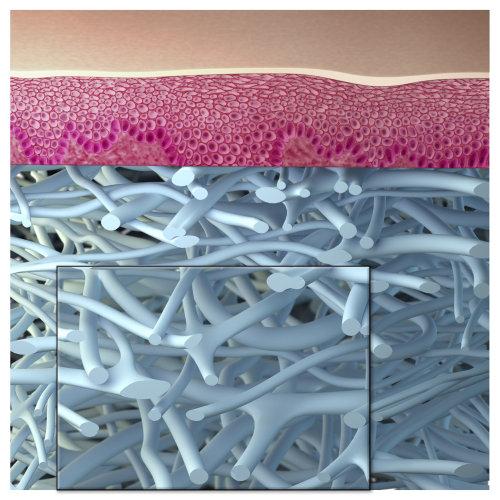 Illustration médicale des nerfs dermatologiques