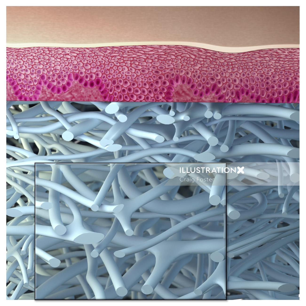 Medical illustration of dermatology nerves