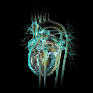 Glass Heart with Coronary Vessels illustration