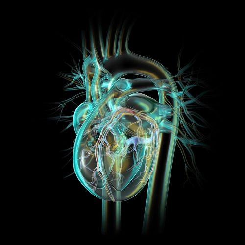 Craig Foster Medical illustrator. USA