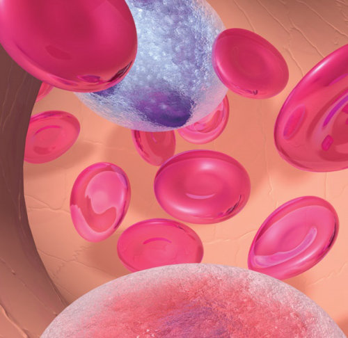 An illustration of  blood cells in artery
