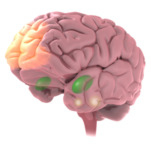 Brain illustration | Medical illustration collection