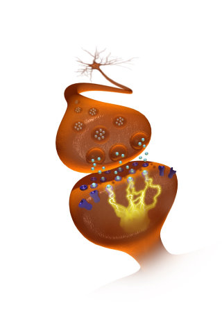 An illustration of neurotransmitters in synaptic cleft