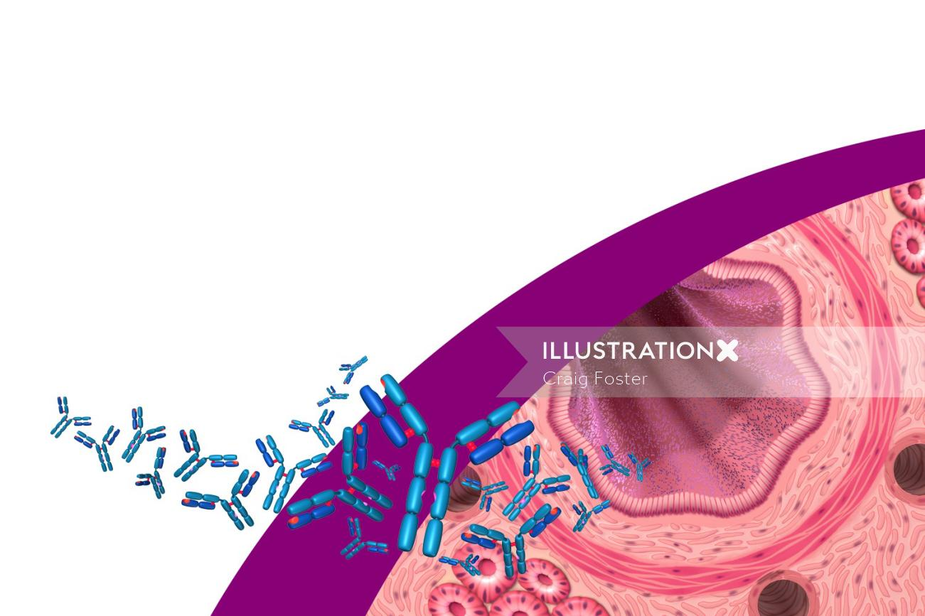 Antibodies and airway for Xolair product launch illustration
