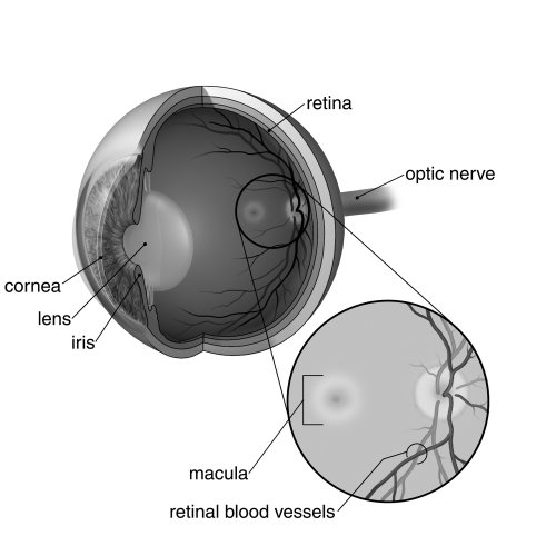 Macular Degeneration illustration by Craig Foster