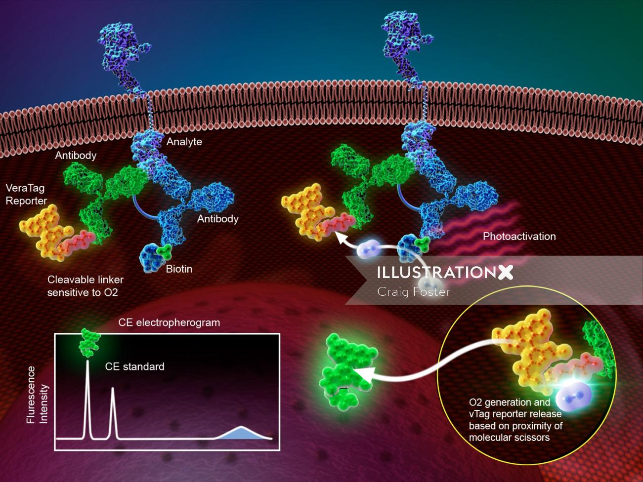 An illustration of protein technology