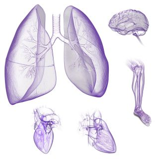 An illustration of body parts composite hr