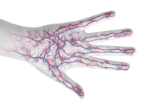 An illustration of hand veins hr