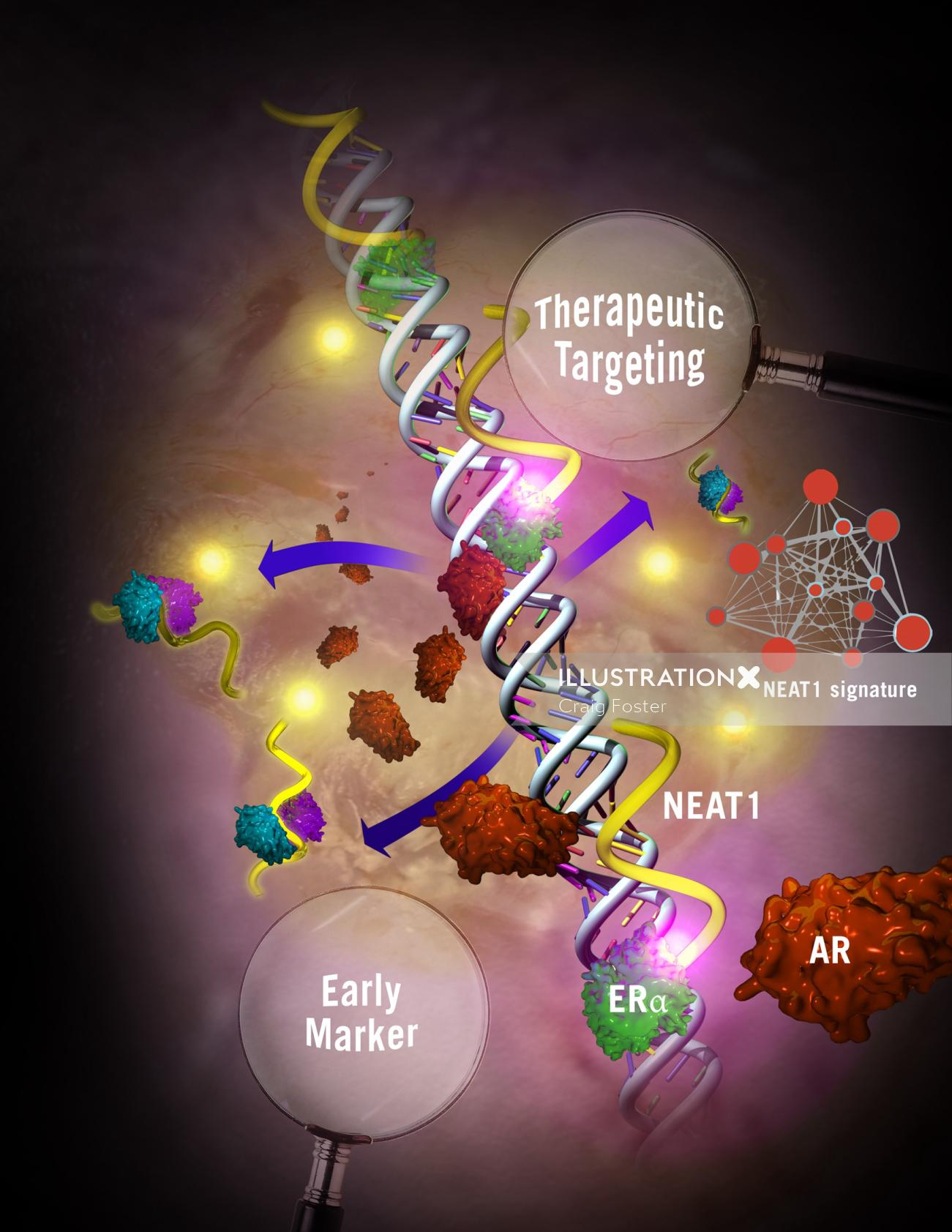 An illustration of therapeutic targeting hr