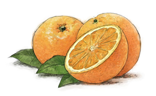 Oranges, Sliced, Fruit photorealistic