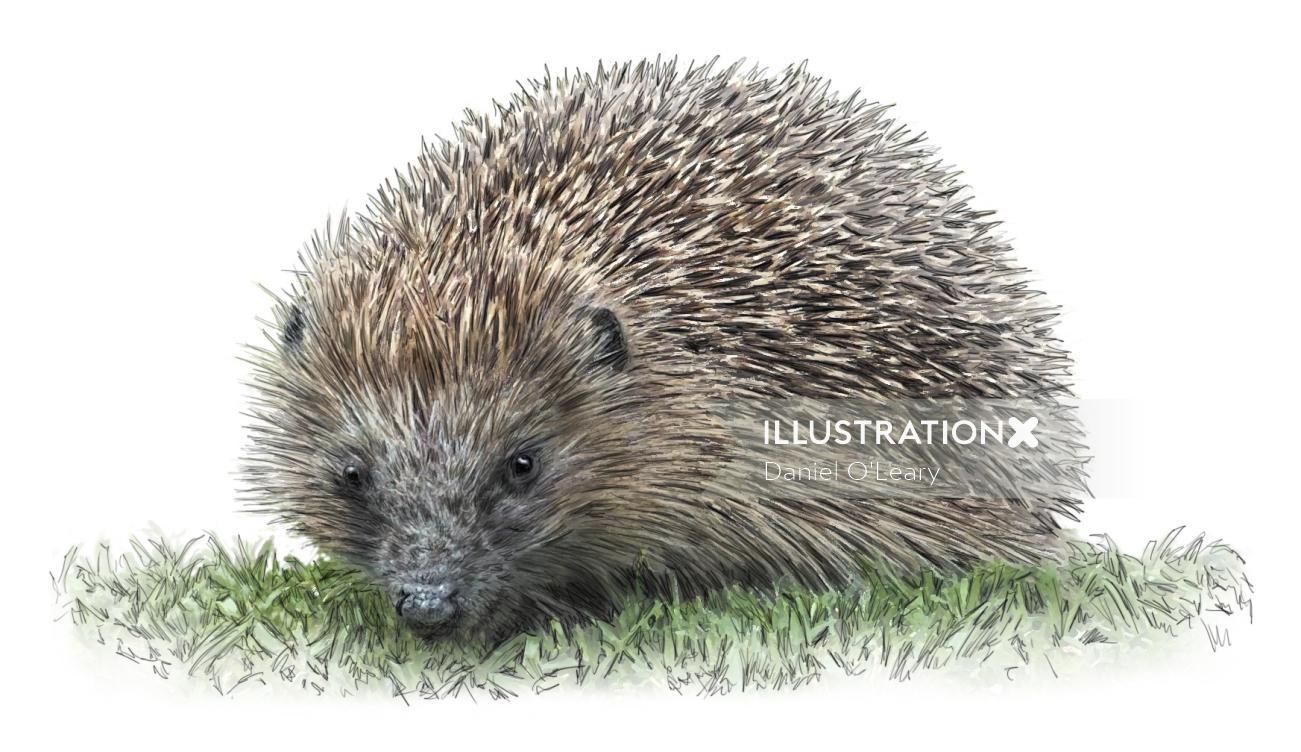 Photorealistic Hedgehog Animal