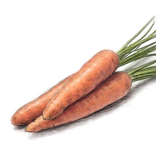 Digital art of Carrot vegetable