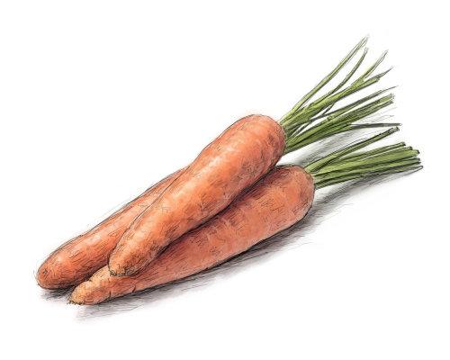Arte digital de vegetales de zanahoria