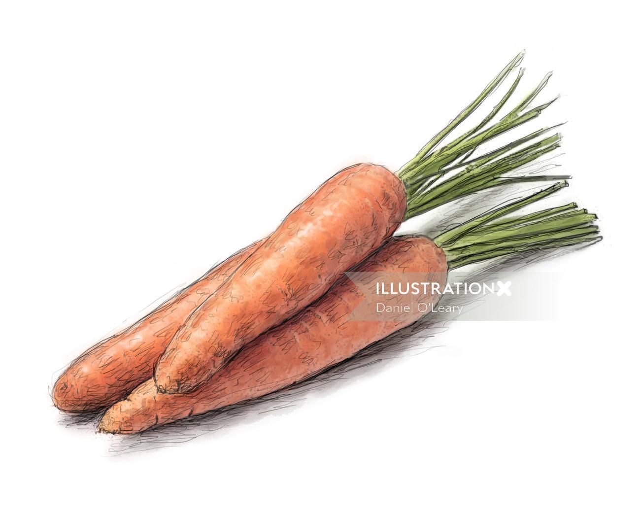 Digital art of Carrot vegetable