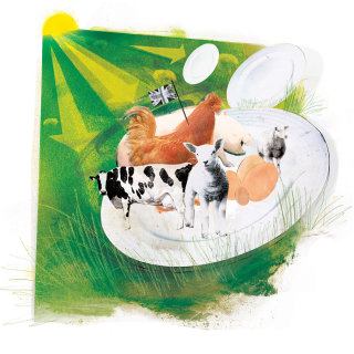 Animals, Hen Pig and Cows sitting together, Green Grass, Sun rays