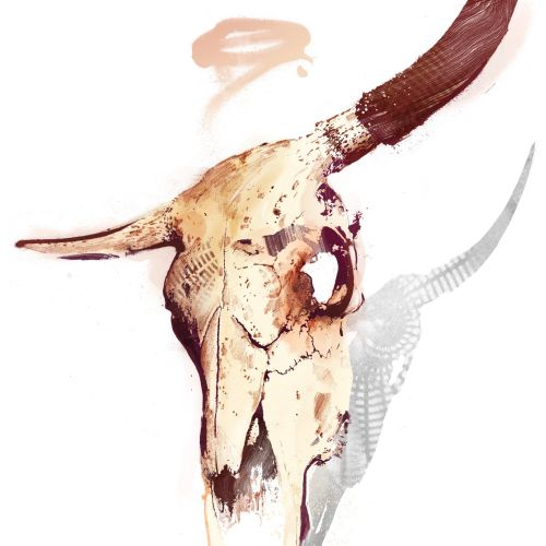Illustration of Bull Skull