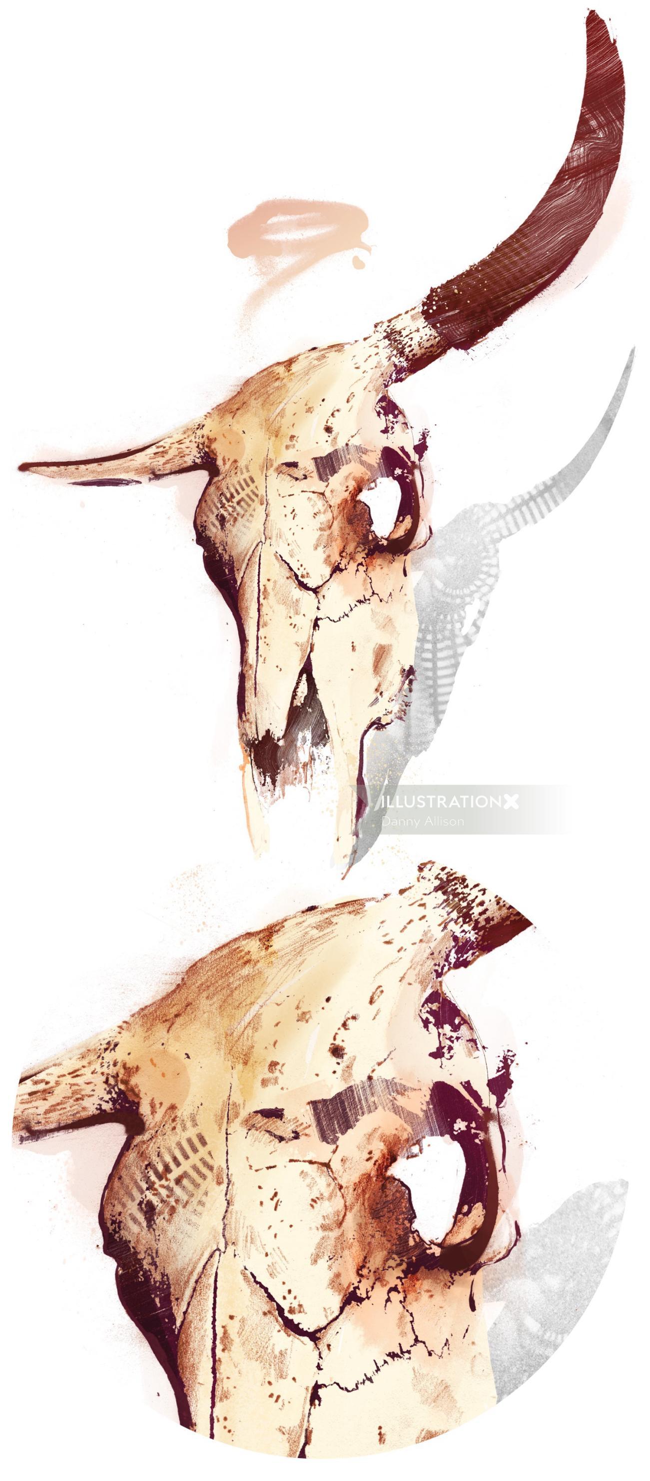 Illustration of Bull Skull