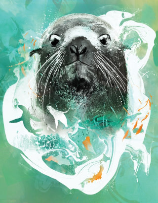 Portrait for Seattle aquarium