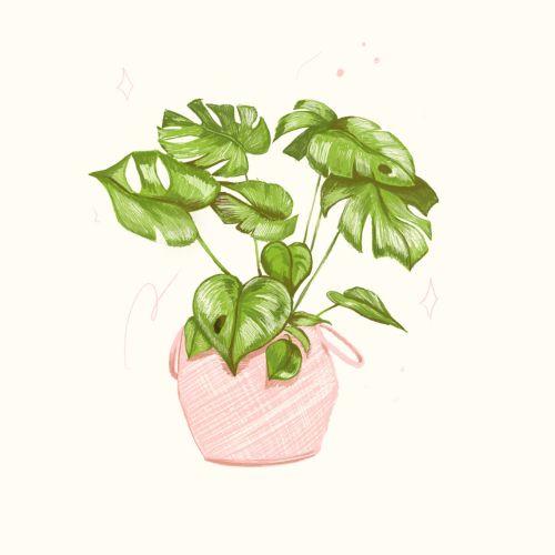Digital Monstera Plant