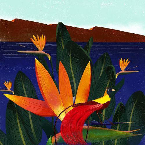 Lotus flower illustration by Decue Wu