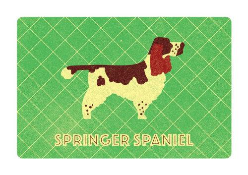 Carte de voeux Springer Spaniel