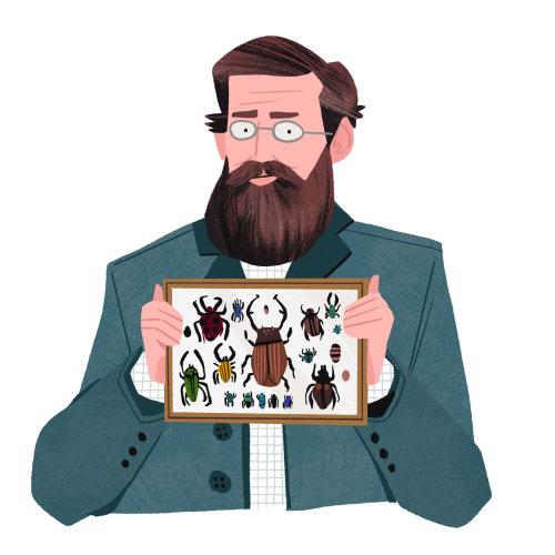 Alfred Russel e sua coleção de besouros