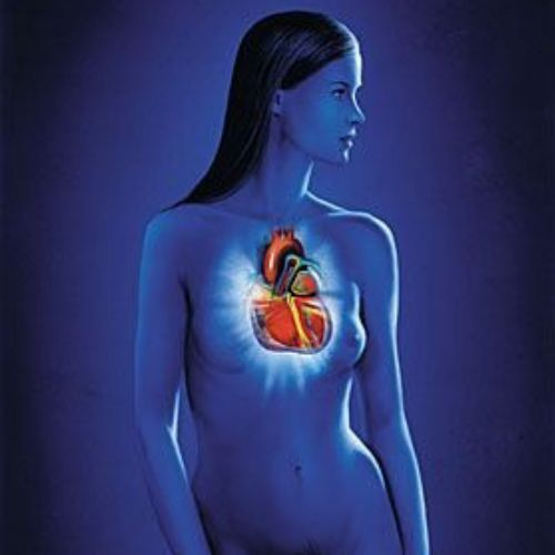 Woman heart | Medical illustration collection