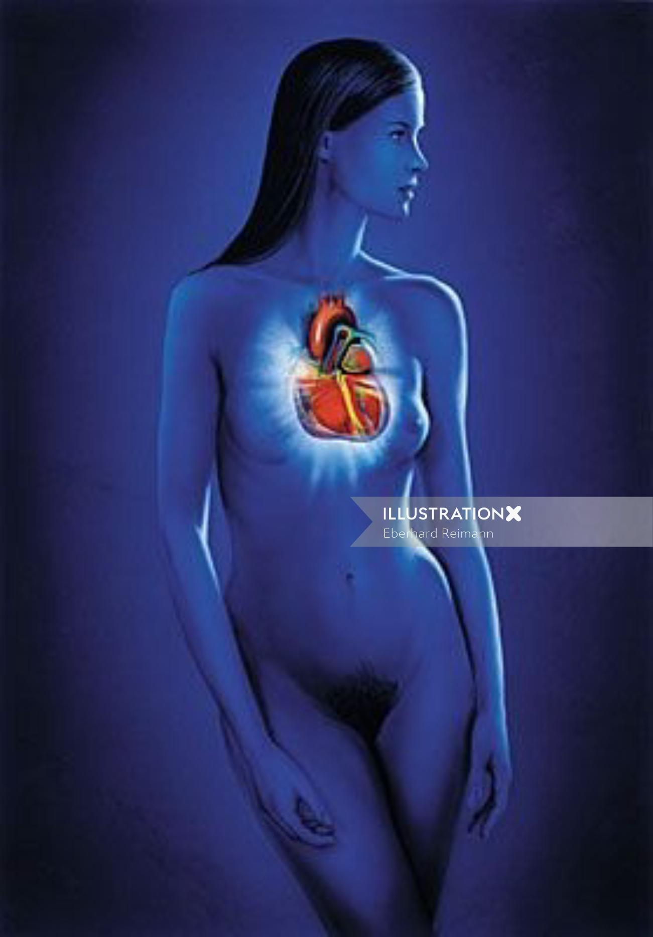 Woman heart   Medical illustration collection