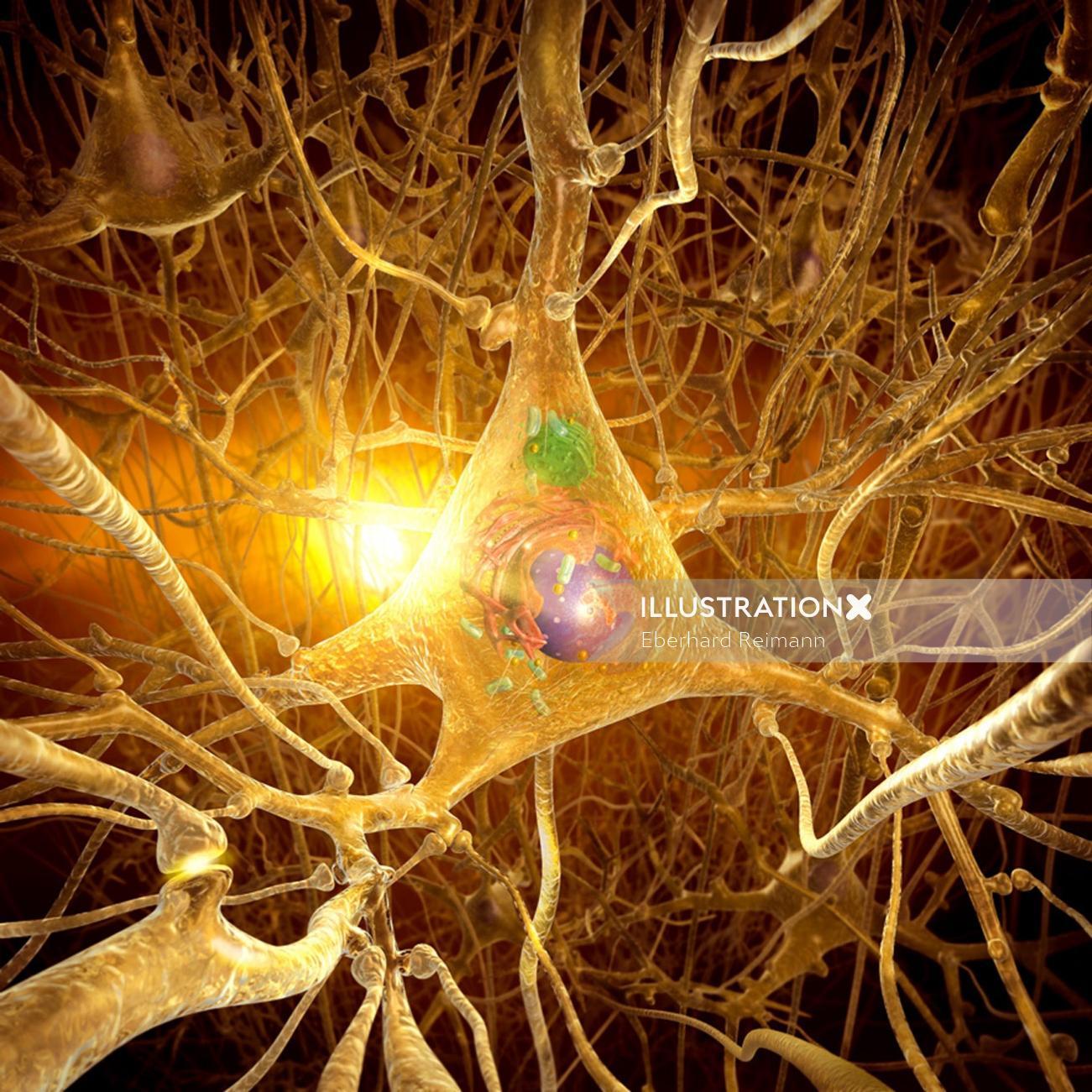 Nerve cell   Medical illustration collection