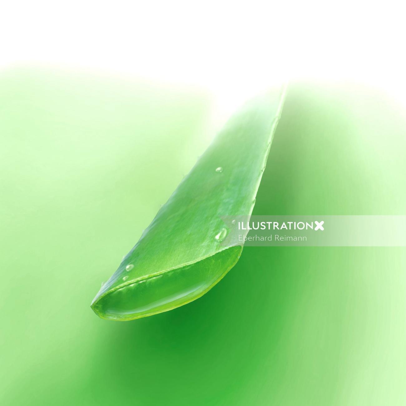 Aloe vera sliced design