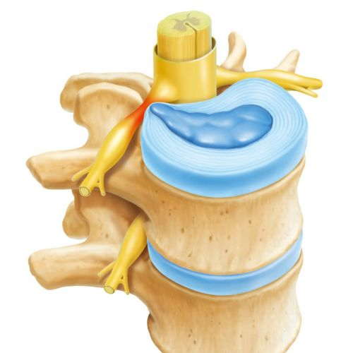 Backbone| Medical illustration collection