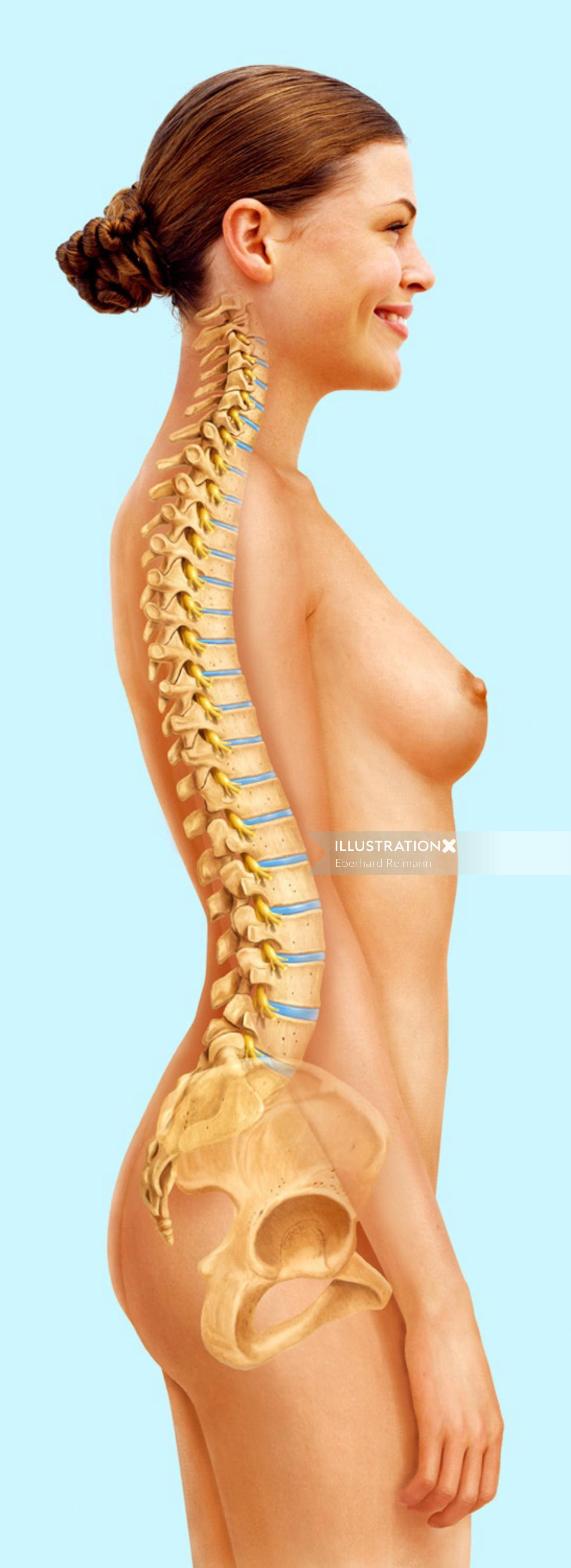 Woman backbone | Medical illustration collection