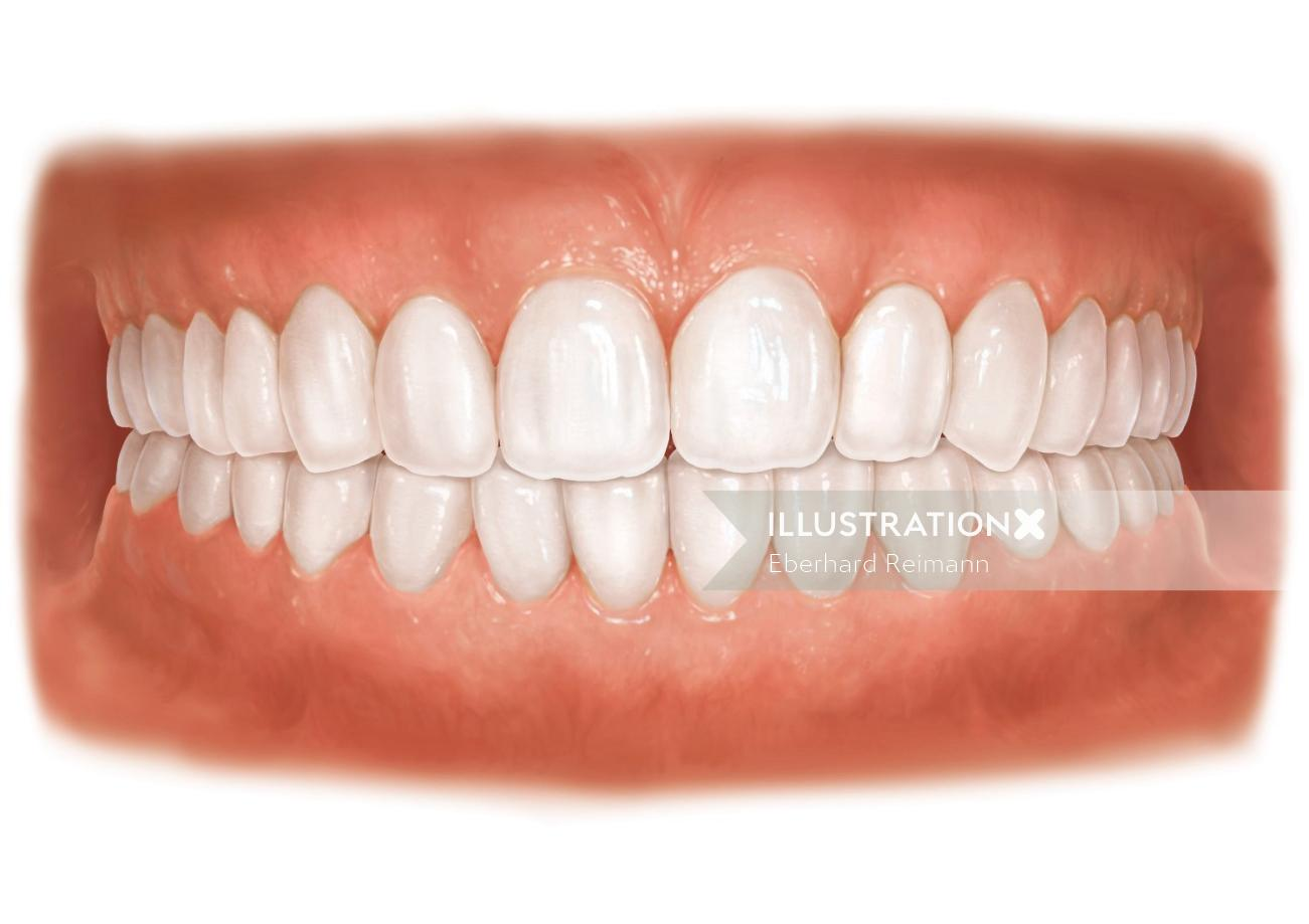 Teeth | Medical illustration collection