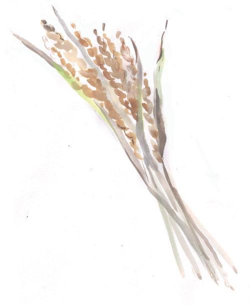 Rice grain painting by Elena Viltovskaia