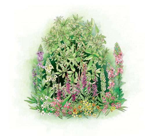 Illustration vectorielle de l'herbe