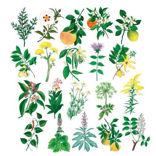 Ella Tjader International lifestyle & nature illustrator. Zurich