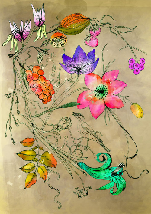 Birds and flowers illustration