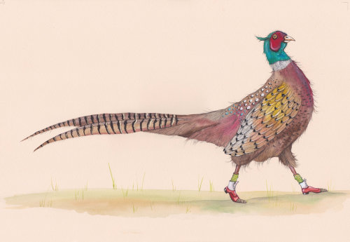 An illustration of colorful pigeon